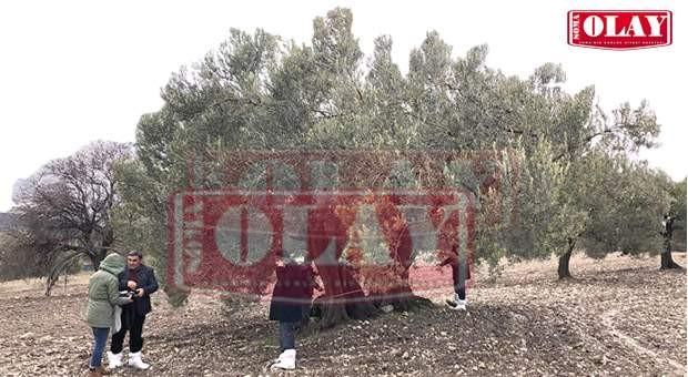 Soma'nın da Anıt Ağacı Olacak!
